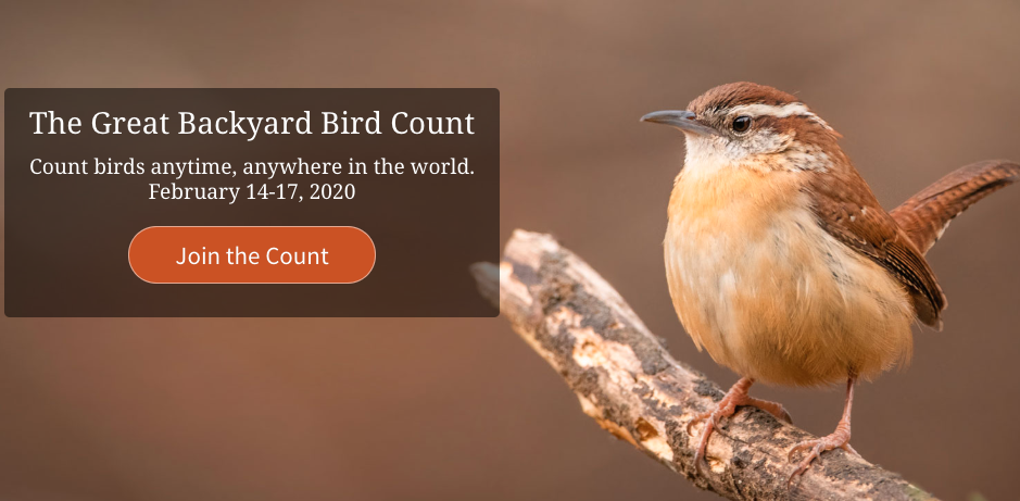 Great Backyard Bird Count Feb. 14-17   The Bluffton Icon