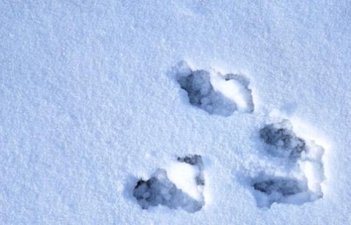 1-6-10 Peter Rabbit's footprints