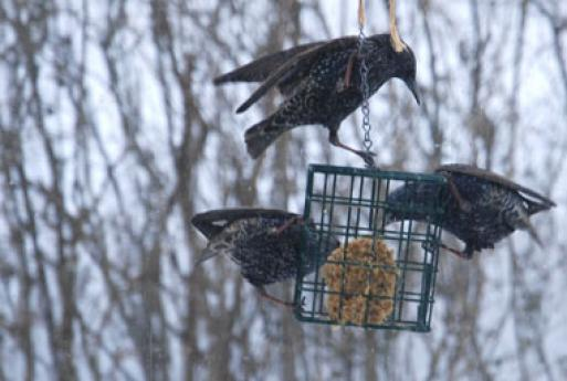 1-24-10 Look what's at the feeder