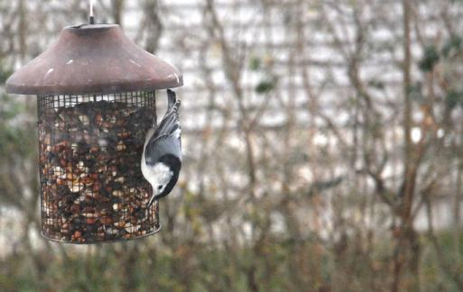 2-4-10 Upside-down on the feeder