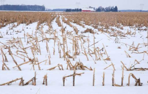2-22-10 Winter corn