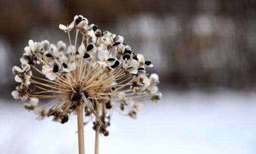 Bluffton's winter landscape