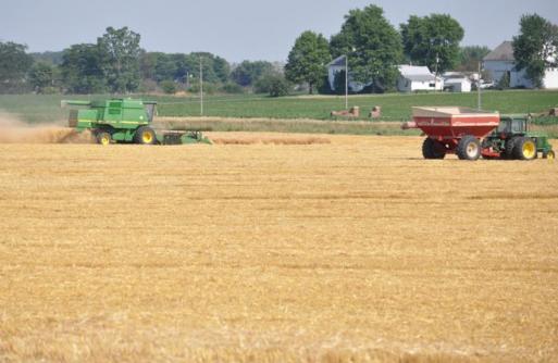 2011 wheat harvest