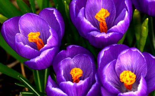 More spring surprises