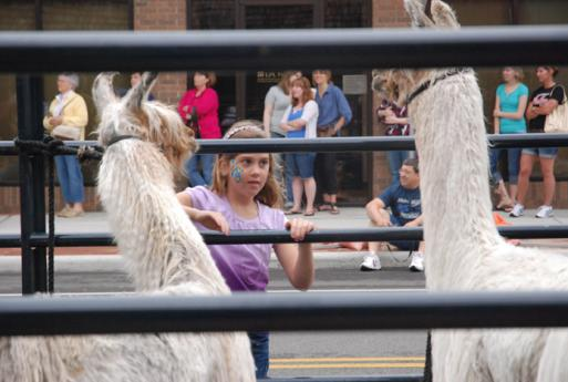 Arts, crafts and llamas