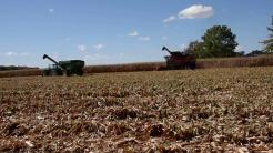 Corn harvest 2020