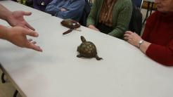 Box turtle at Sr  Center 10 14 18