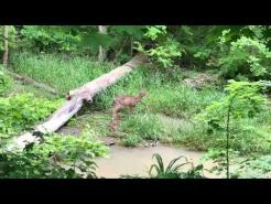Deer in Little Riley May 2020